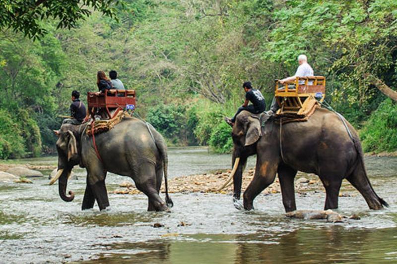 Resultado de imagen de elefantes en tailandia