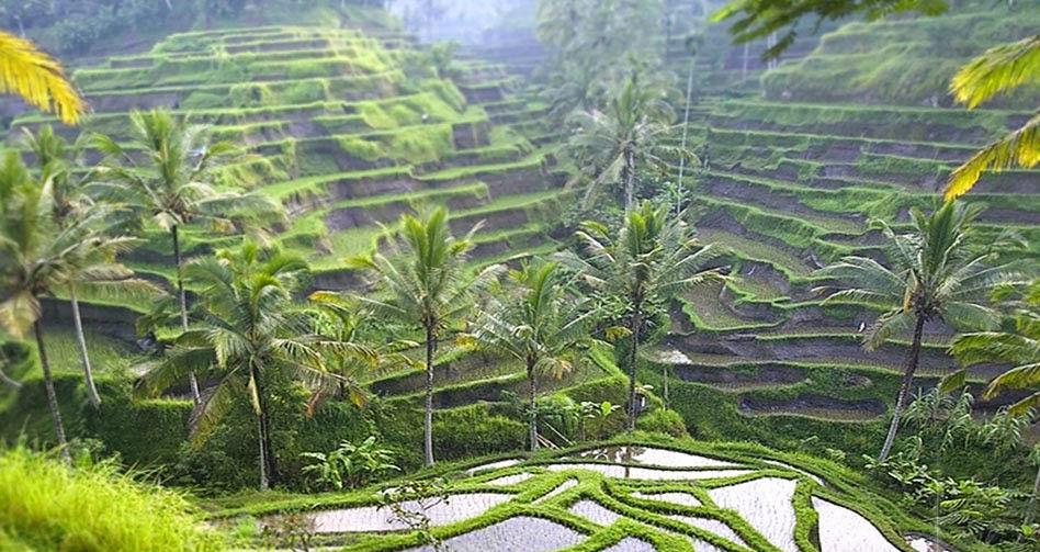 Los Arrozales De Bali Más Importantes Atracciones Bali