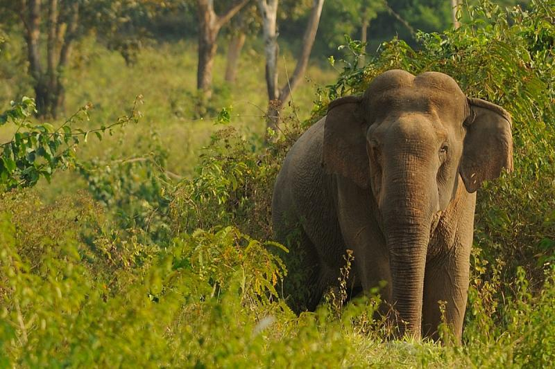 Parc National de Kui Buri - Éléphant sauvage en Thaïlande