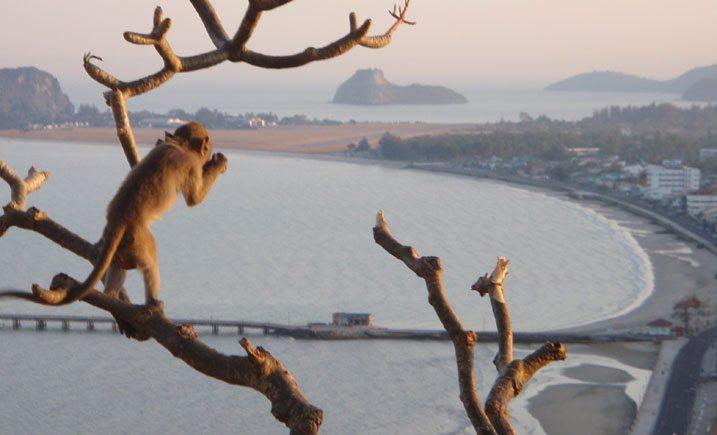 Prachuap Khiri Khan : Singe admirant la vue sur la plage