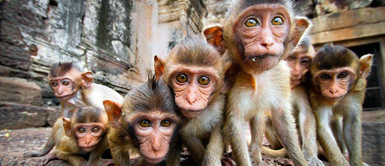 Top 5 des hôtels pas chers à Lopburi - pleins de petits singes en premier plan